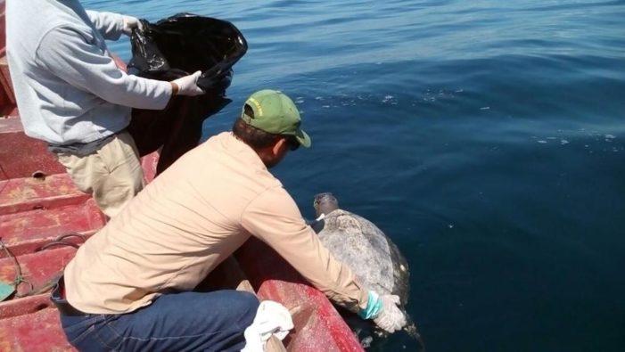 Centinaia di tartarughe morte in mare a El Salvador, le cause sono un mistero